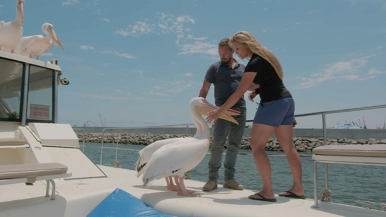 Rudie y Marlice en barco con pelícanos
