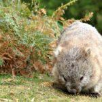Al Descubierto Tasmania 4