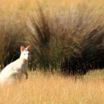 Al Descubierto Tasmania 6