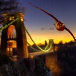 Halcón peregrino volando, puente Clifton. ©Steve Nicholls - All media, WW, in perpetuity for TMFS