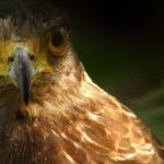 Vida extrema águila