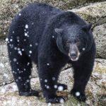 Vida extrema oso