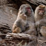 Familia de monos. ©LIC CHINA