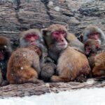 Monos en el invierno. ©LIC CHINA