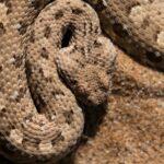 Namibia Serpiente