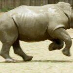 Pequeños huérfanos rino 3
