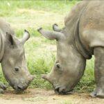 Pequeños huérfanos rino 6