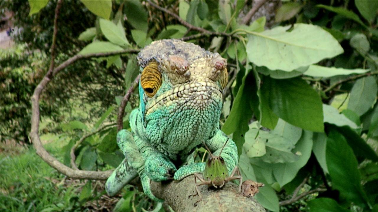 Camaleón verde