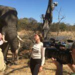 Safari épico grabando con elefante