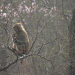 El mono ciego 10 ©CROP TV LIC CHINA