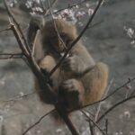 El mono ciego 11 ©CROP TV LIC CHINA