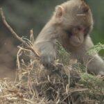 El mono ciego 12 ©CROP TV LIC CHINA