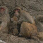 El mono ciego 15 ©CROP TV LIC CHINA