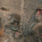 El mono ciego 4 ©CROP TV LIC CHINA