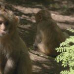 El mono ciego 7 ©CROP TV LIC CHINA