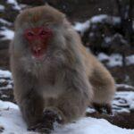 Mono corriendo ©LIC CHINA