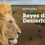 ESTELARES_REYES_DESIERTO con texto
